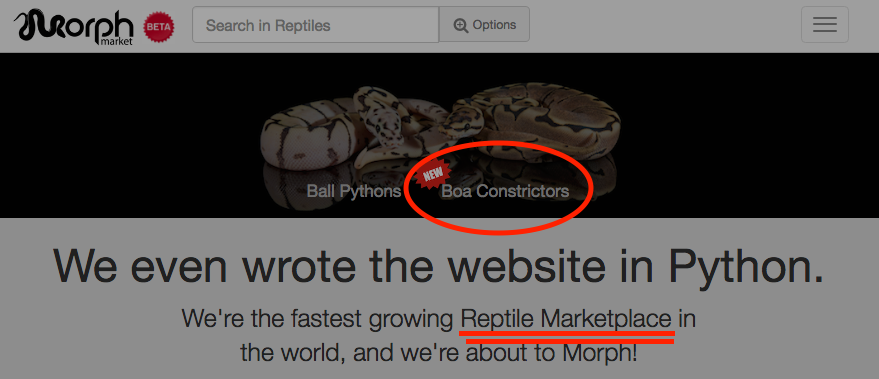 MorphMarket is Morphing! (Boas are coming)