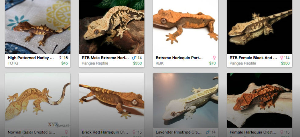 Now with Crested Geckos!