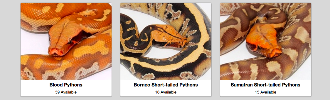 Short-tailed Pythons Marketplace
