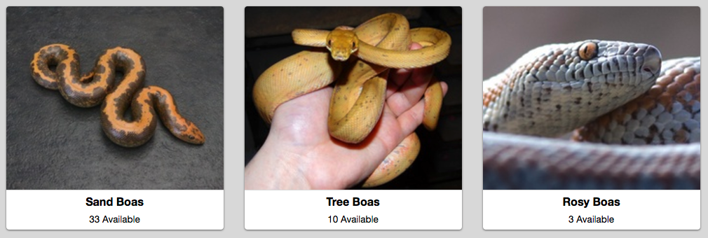 New Boa Subcategories