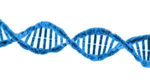 Genetics Updating Improved