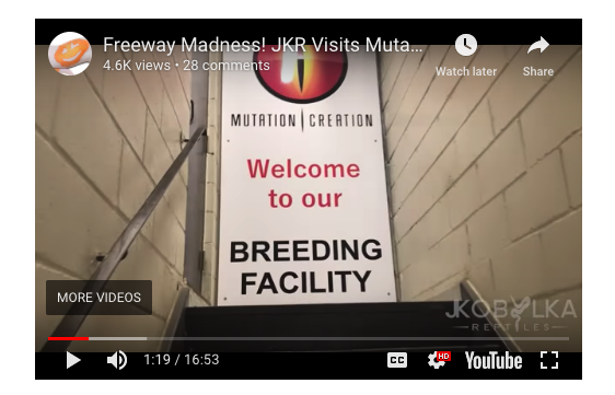 Mutation Creation's Store Video that showcases their facility.