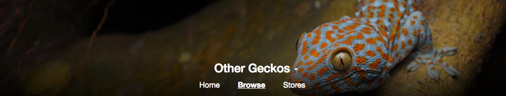 All the Geckos!