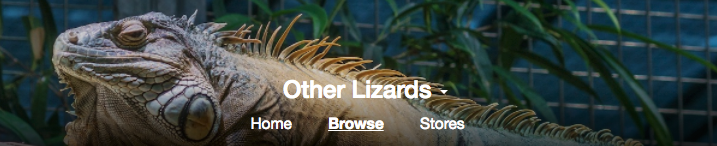 All the Lizards!