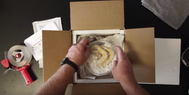 How to Ship Live Reptiles