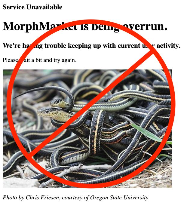 """Website Performance & Eradication of """"Garter Snakes"""""""